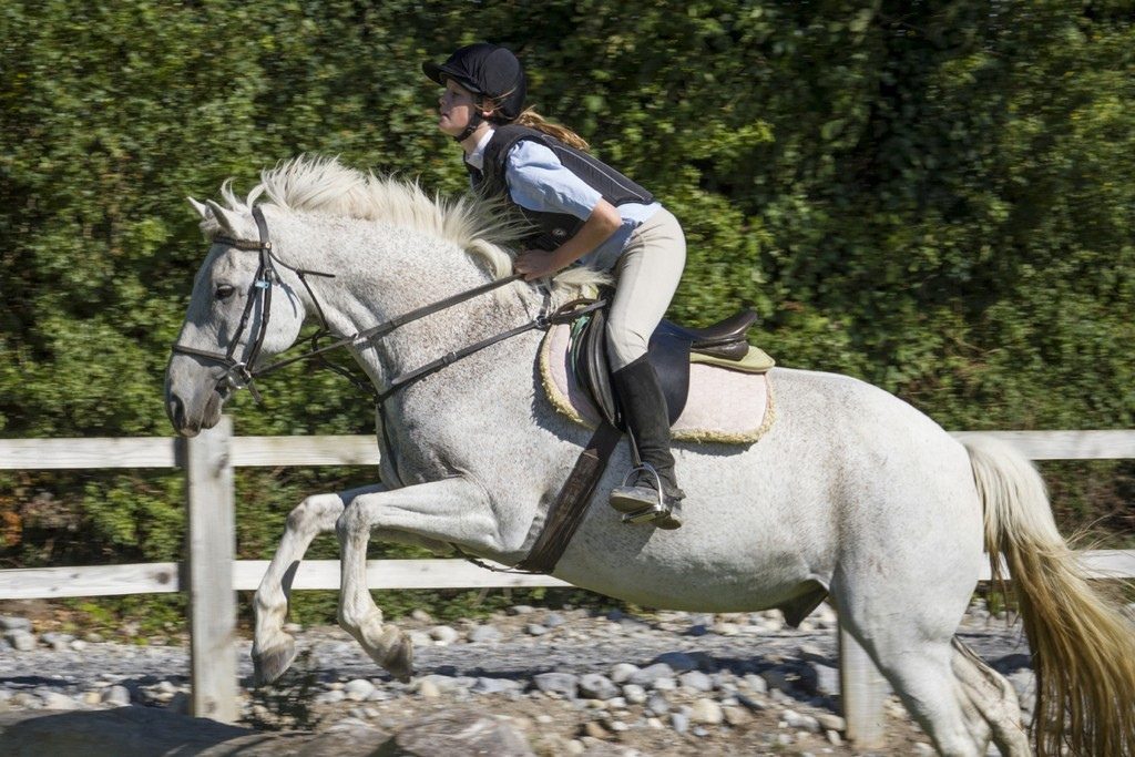 centre equestre irlande