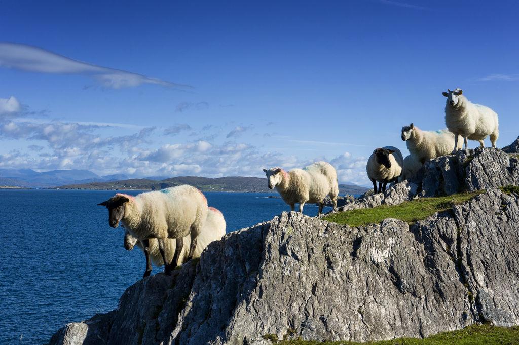 Voyage Organis 233 En Irlande Partez En Irlande Avec Alainn